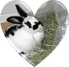 Volunteer for Hay Packing, Potluck & Transport